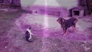 Koteł zaczepia psa #1-dziwne zwierzęta