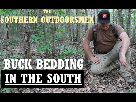 DEEP SOUTH PUBLIC LAND BUCK BEDS- How To Scout For Deer
