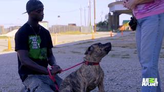 See Tia Torres's Obedience Training Basics | Pit Bulls and Parolees