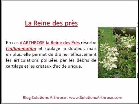 Traitements naturels de l 39 arthrose les plantes youtube for Les plantes