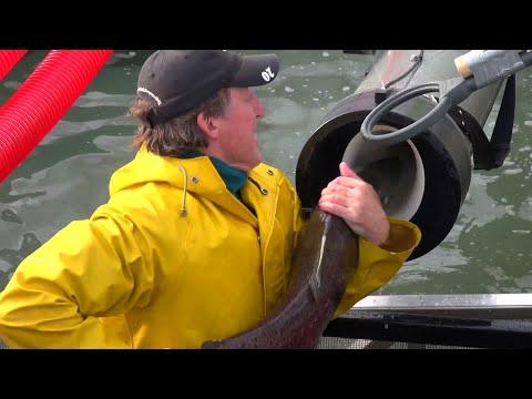 PNNL Tests Fish Passage System