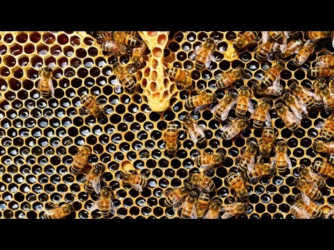 """""""معجزة النحل"""" في نوتردام  - نشر قبل 59 دقيقة"""