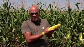 Успешно земеделие - броят от 16. 09. 2021