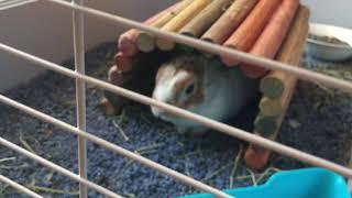 Cute Rabbit... Chubby Bunny 🐰