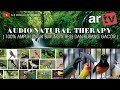 Media Hobi Natural Therapy Audio Terapi Untuk Burung Stress Dan Kurang Gacor  Mp3 - Mp4 Download