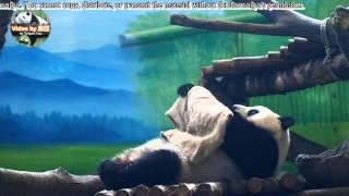 20150628圓仔幫自己蓋小被被 The Giant Panda Yuan Zai