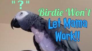 Birdie Won't Let Mama Work!