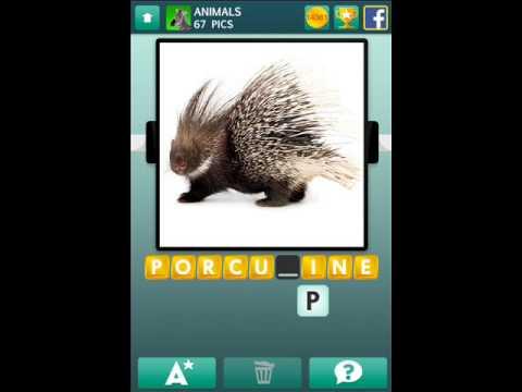 100 Pics Animals Level 61-70 Answers Cheats - App Cheaters
