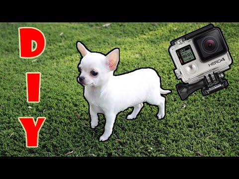 diy:-small-dogs/chihuahuas-gopro-harness!---best-tutorial-on-youtube!