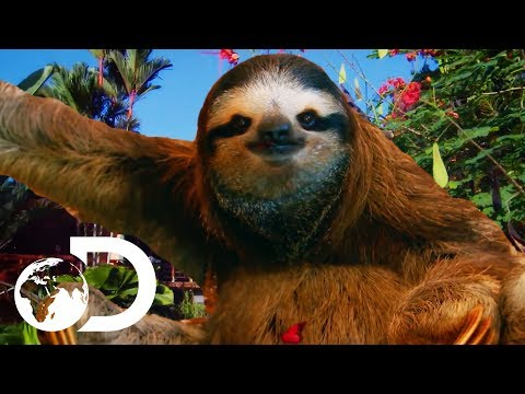 The Most HEARTBREAKING Sloth Bromance | Meet The Sloths