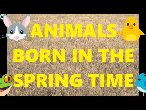 ANIMALS BORN IN THE SPRING TIME