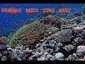 Red Sea Diving - Sharm El Sheik