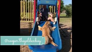 FUNNY AND CUTE DOGS  PAOLIDOG COMPILATION  28
