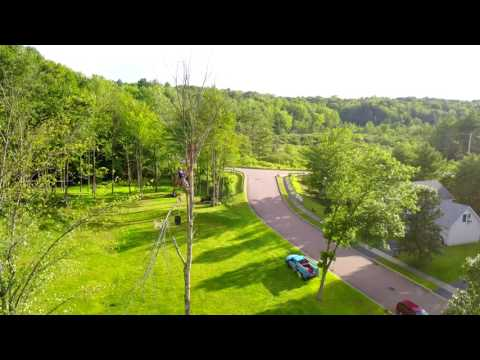Tree cutting Milton Vermont Part 3