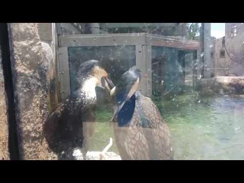 Baltimore Zoo trip