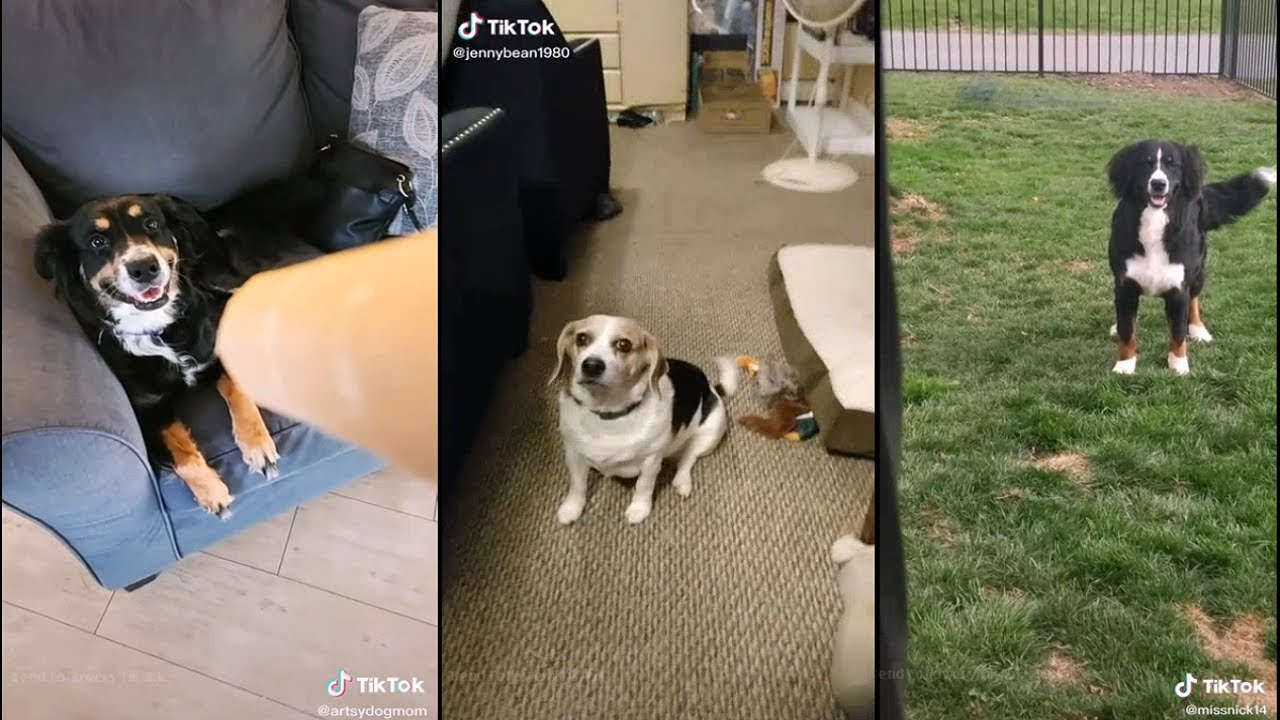 Dogs reaction to the lion roar (paper towel roll)
