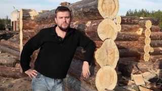 Обработка древесины. Синева на древесине. Отбеливатель древесины Megasept. Тест на бревне. Часть 2