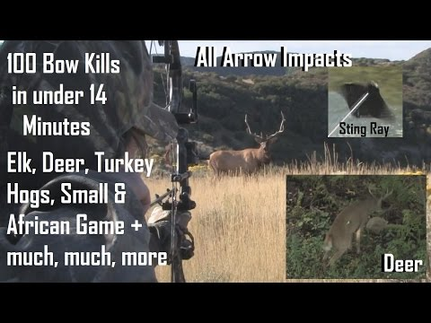 100 bow hunts in 14 minutes  BEST ARROW IMPACTS see how we archery hunt big game  PLACEMENT