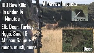100 bow hunts in 14 minutes  BEST ARROW IMPACTS see how we archery hunt big game  PLACEMENT POV