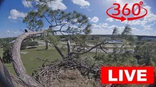 Southwest Florida Eagle Cam - 360 thumbnail