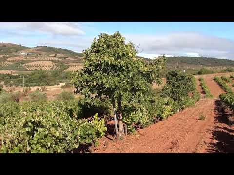 Salselas   Vista  na vinha sobre vale da Porca eSerra de Bornes 12 9 17