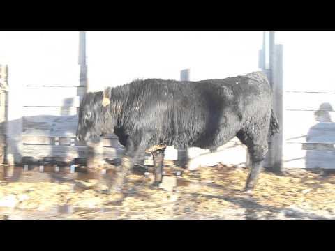 2014 Alkali Inc Bull U883
