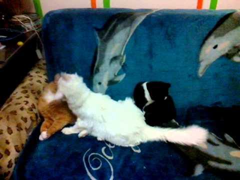 Коты гомосексуалы