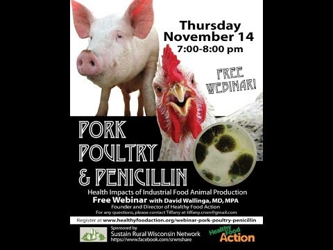 Pork, Poultry and Penicillin  Health Impacts of Industrial Food Animal Production