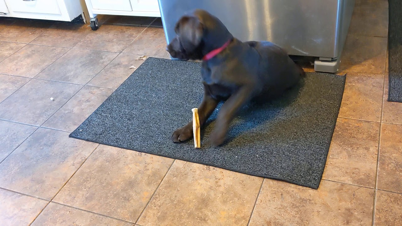 Prevent Resource Guarding in Puppies