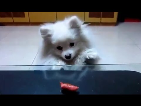 Funny Dog Video Compilation 2015 - funny and cute dogs