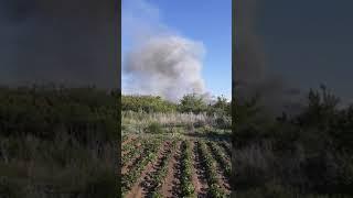 Пожар на культурном пруду: бедствие для растительности и зверья