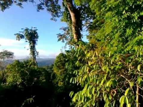 Rainforest's sound...