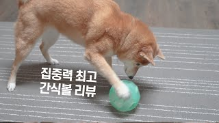 강아지 간식 노즈워크 장난감 리뷰! 공처럼 굴리는 재미…