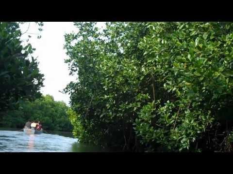 Pitchavaram Mangrove Forest Near Pondy, TN Nov 2010.mp4