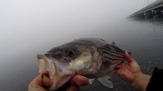 A CROSS the BAY Fishing for STRIPED BASS with Clam Baits - A TOOL
