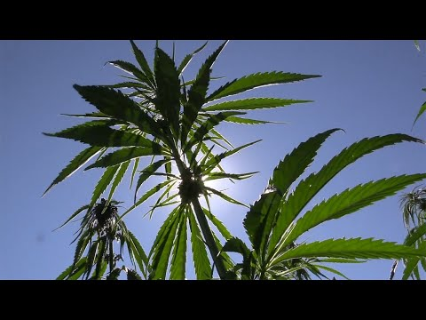Industrial Hemp Solutions Can Save The Planet