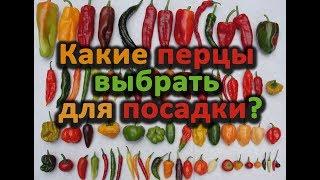 Какие перцы сажать? Отличная подборка: от ранних до поздних, от тепличных до консервирования.