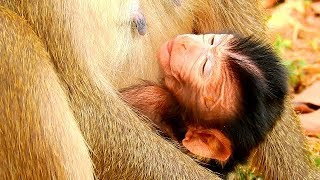 JUST BORN TODAY ! WHAT HAPPEN ON NEW BABY DELENA ? NEW BABY MONKEY DELENA VERY TIRE AND EXHAUSTED .