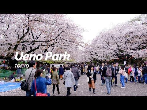 Ueno Park, Tokyo | Japan Travel Guide