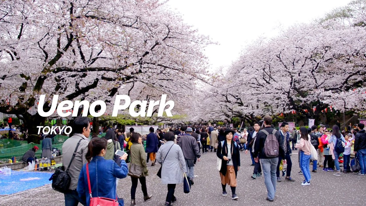 Ueno Park, Tokyo | Japan Travel Guide - YouTube