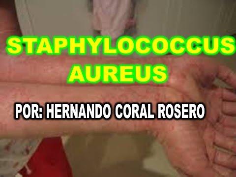STAPHYLOCOCCUS AUREUS - BACTERIA QUE PRODUCE  INFECCIONES