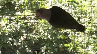 Il mio piccolo allevamento amatoriale di pappagalli