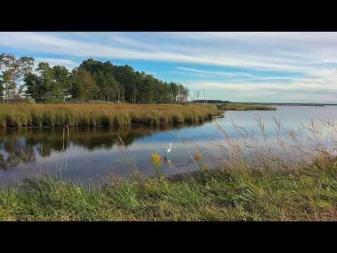 Wild Goose Chase - Bike Route Through Blackwater Wildlife Refuge