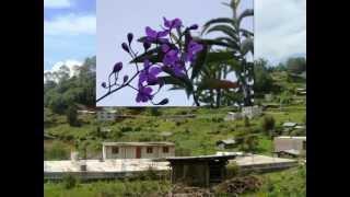 Sta. Lucia Monteverde, Oaxaca