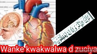 Maganin Wanke kwakwalwa d zuciya daga Dr Muhammad