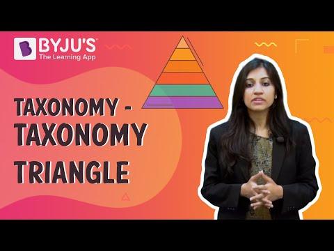 Taxonomy 02 - Taxonomy Triangle