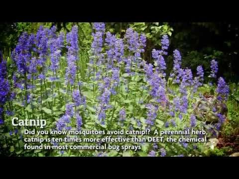 Pest-Repelling Plants for Your Backyard