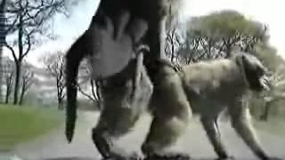 Секс с обезьянами!!! Прикол!!!
