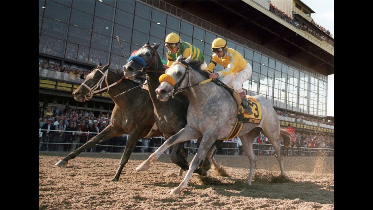 Image Result For Preakness Horses