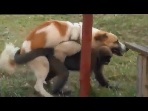 Проститутку ебет собака заказать индивидуалку в Тюмени ул Элеваторный Взвоз